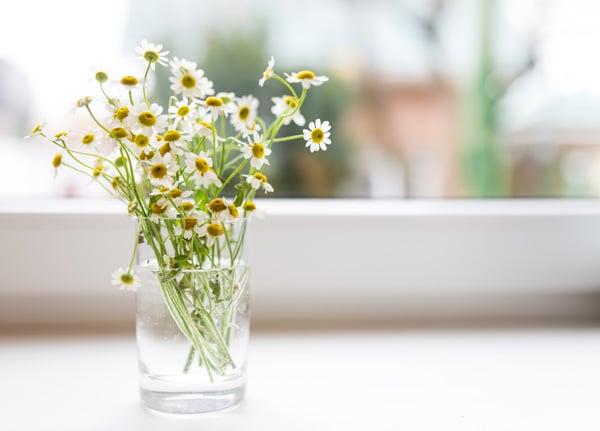 Vase on sunny windowsill