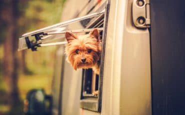 Dog hanging out the window of an RV